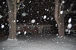 20080211 - a winters eve - 04 - big flakes